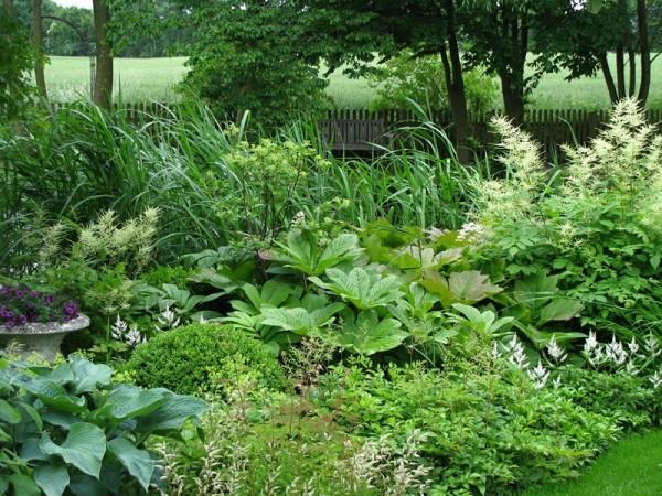 Kastanienblättriges Schaublatt – Rodgersia aesculifolia